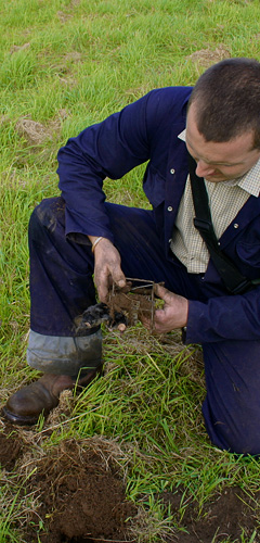 Our mole catcher removing a mole from a farmers field in Oxford