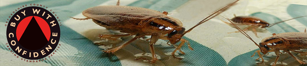 Hawthorn Pest Control Oxford - Cockroach Removal