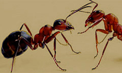 Pest Control for ant removal