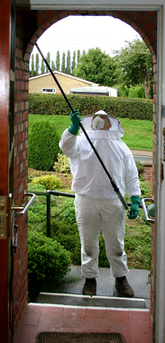 Our pest controller removing a wasp nest in Oxford